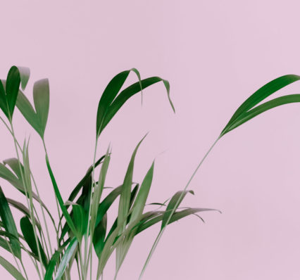 wc-banner_pink